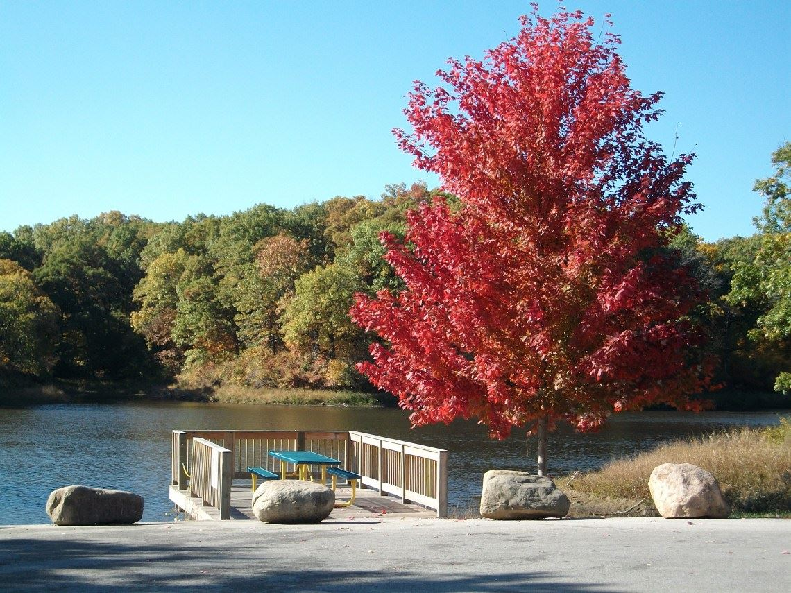 Water Works Lake - Red tree